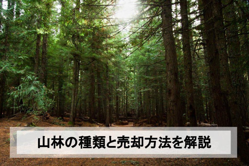 山林売却のために知っておきたいこと 山林の種類と売却の流れ